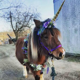 Choppa Unicorn