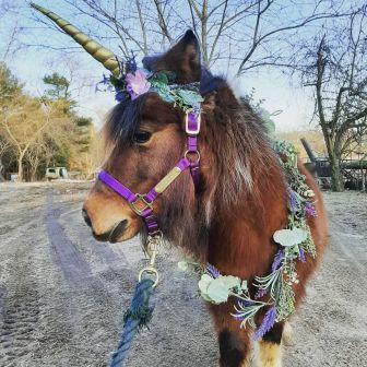 Choppa Unicorn2
